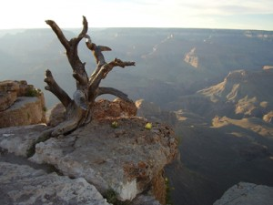Grand Canyon National Park - Near Yaki Point