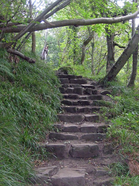 Step Through Woods