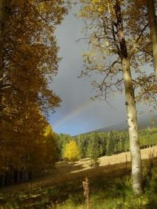 Flagstaff Aspen Rainbow